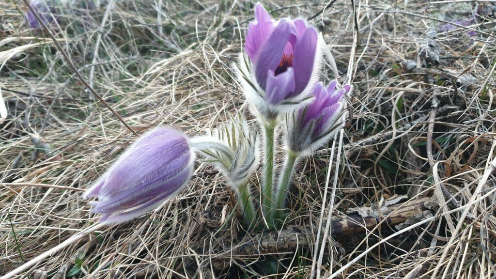, Na Liptov prichádza jar, čas opekačiek a aktívneho prieskumu…